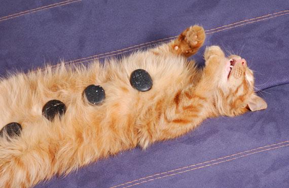 cat-in-spa