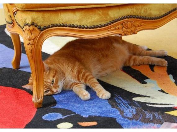 red_cat_in_negresco_hotel_nice