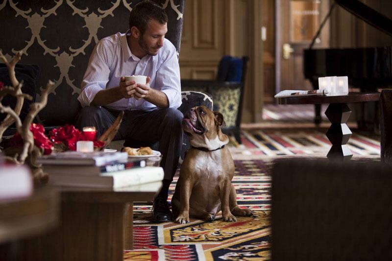 Собаки снимают стресс гостей отеля