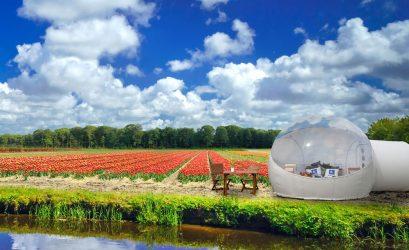 уникальная капсула в поле тюльпанов